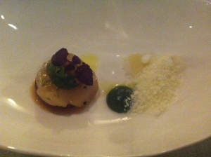 Sea scallop